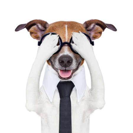 perro asustado: ocultar cubriendo perro loco con corbata y gafas tontas