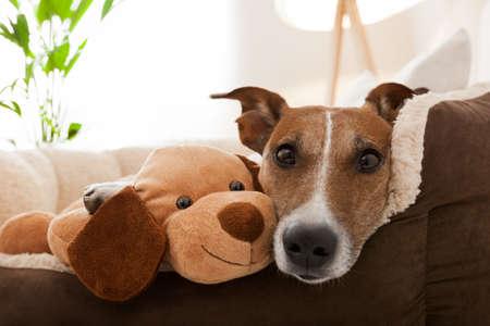 Accogliente paio di cane e migliore amico di riposo sul divano Archivio Fotografico - 25965218