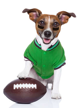 sporty rugby dog with a big sport ball Stock Photo