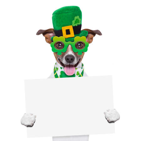 st patricks  day dog holding a blank banner photo