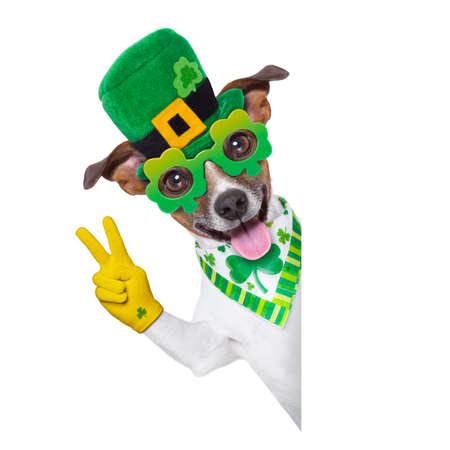 patricks day: perro del d�a de los patricks del st detr�s de una bandera en blanco