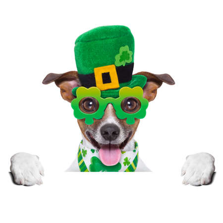 st patricks  day dog  behind blank banner photo