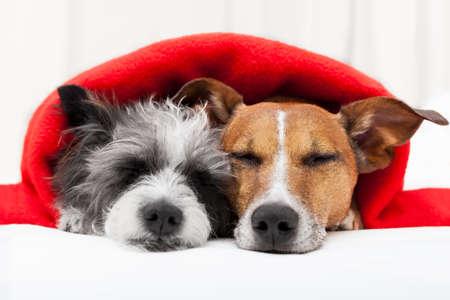 puppy love: par de perros cari�osos en la cama juntos Foto de archivo