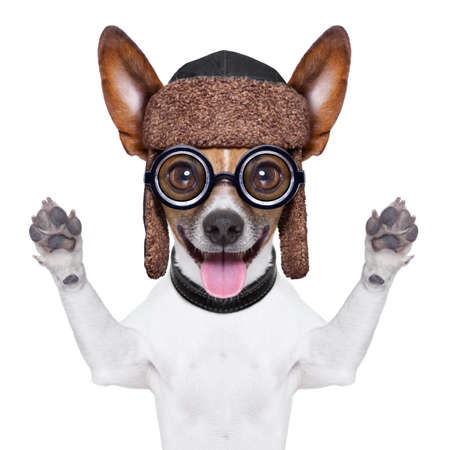 funny glasses: crazy silly dog with funny glasses showing tongue Stock Photo