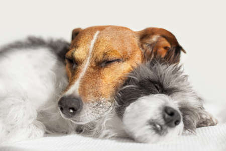 couple of loving dogs in bed close together photo
