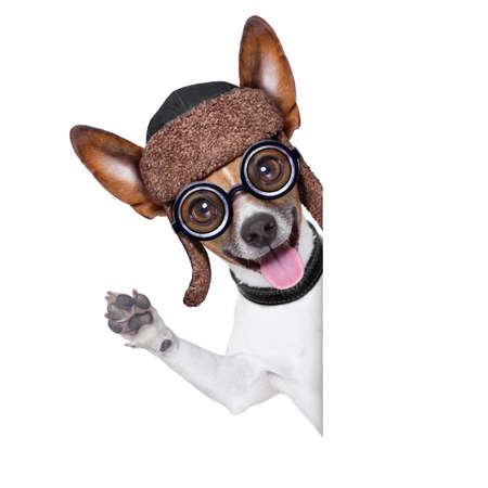 Glass: perro tonto loco con los vidrios divertidos detrás de cartel en blanco