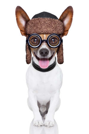 animal idiot: crazy silly dog with funny glasses showing tongue full body Stock Photo