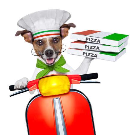 vespa piaggio: cane che consegna la pizza con una pila di scatole di pizza su una moto