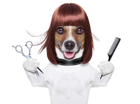 uroda: fryzjer pies trzyma grzebień i nożyczki