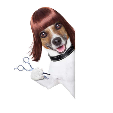 hairdresser dog behind a white and blank placard photo