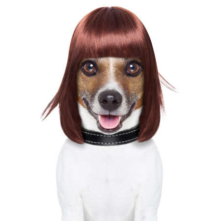 hairdresser dog ready to look awesome at the spa photo