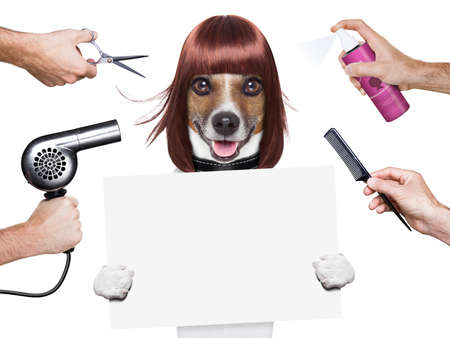 hairdresser dog holding a white and blank placard