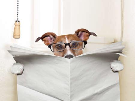 pee: perro sentado en el inodoro y la lectura de la revista