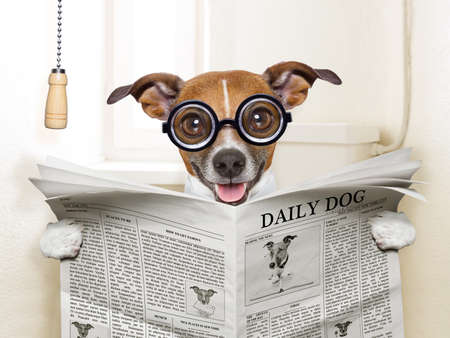 poo: crazy silly dog sitting on toilet and reading magazine