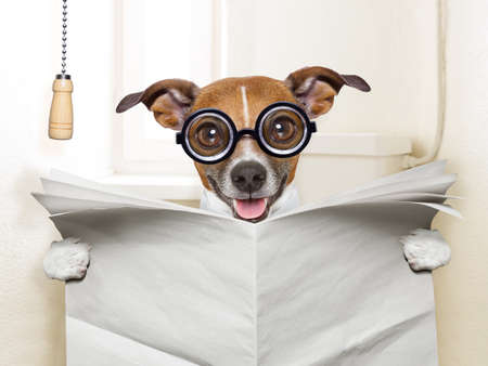 crazy silly dog sitting on toilet and reading magazine photo