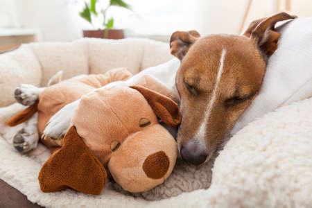 grappige honden: paar liefhebbende vrienden in bed dicht bij elkaar