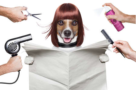 haircut: hairdresser dog holding a white blank newspaper or magazine