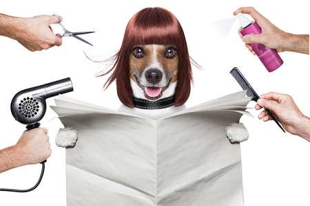 periódicos: peluqueria canina celebración de un periódico o una revista en blanco blanco Foto de archivo