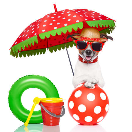 dog under umbrella with red sunglasses and a nice colorful hat photo