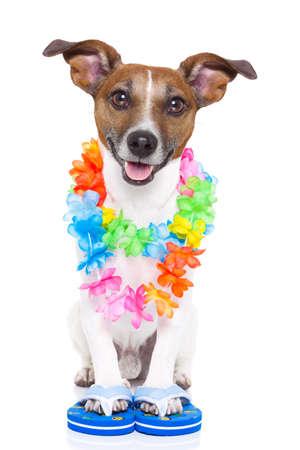vacances d �t�: chien pr�t � aller pour des vacances d'�t� en ce moment Banque d'images
