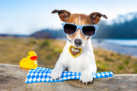 bavarian dog with glasses and a yellow plastic duck
