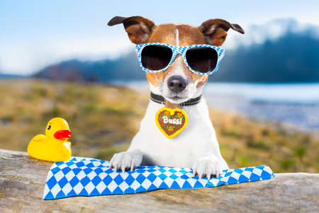 bavarian dog with glasses and a yellow plastic duck photo
