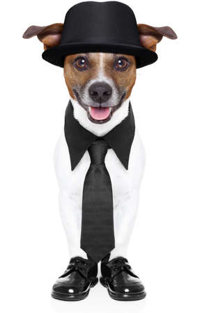 dog in tuxedo with black tie and black hat photo
