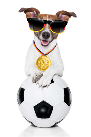 Brazil dog holding soccer ball photo