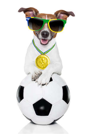 fifa world cup  brazil dog holding soccer ball photo