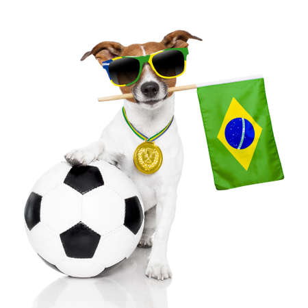 dog waving brazil flag photo