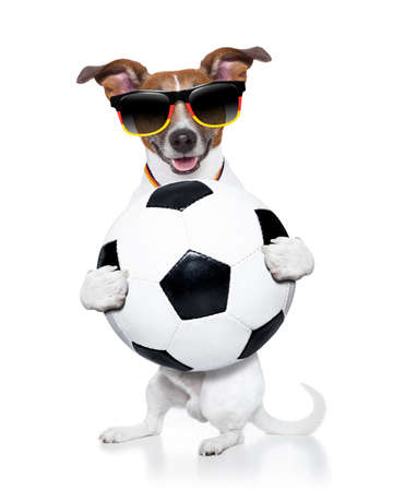 german dog holding soccer ball photo