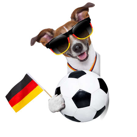 dog with soccer ball photo