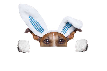 dog dressed up as bunny behind white blank banner