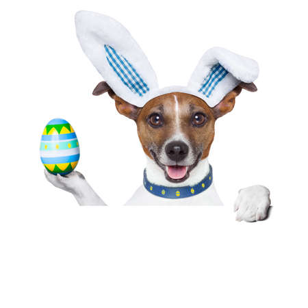 dog dressed up as bunny with easter holding an colorful easter egg photo