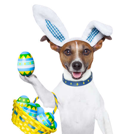 dog dressed up as bunny with easter basket full of eggs photo