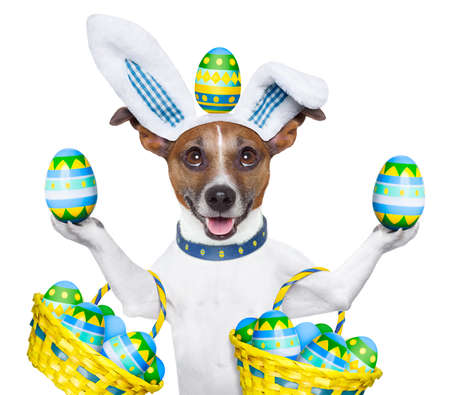 dog dressed up as easter bunny holding and balancing eggs Stock Photo