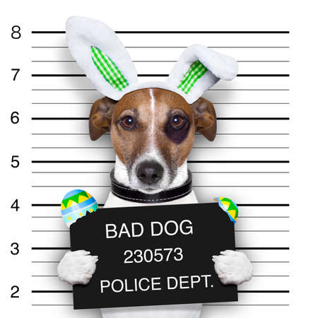easter mugshot bad dog with broken easter eggs photo