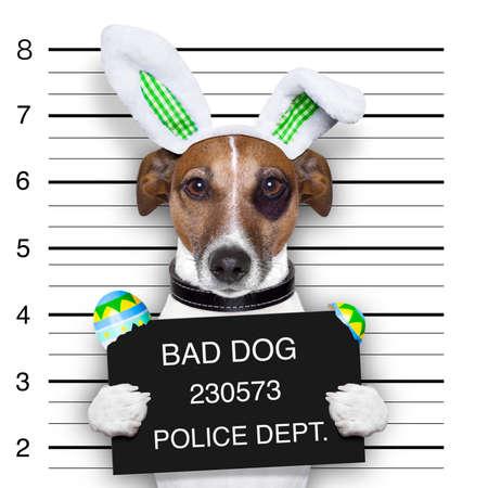carcel: Pascua mugshot perro malo con los huevos de Pascua rotos