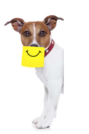 dog with a yellow note sticking on nose with a big smile on it