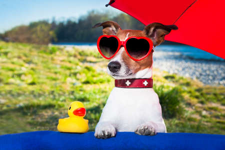 dog with yellow duck and umbrella on summer holidays photo
