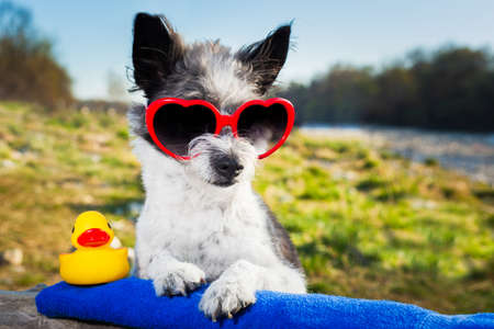 dog with heart sunglasses on a summer vacation day photo