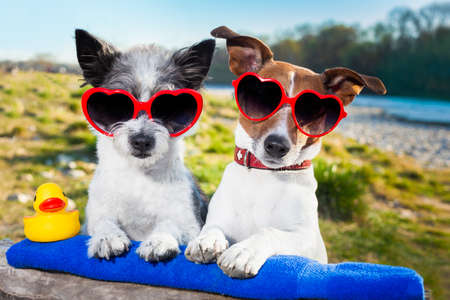 two dogs in love enjoying the summer holidays photo