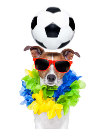funny  soccer dog with spinning ball over the head photo