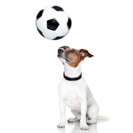 soccer dog with spinning ball over the nose photo
