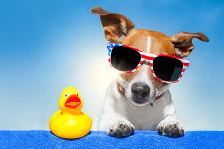 dog sunbathing on ab blue towel with a plastic duck and fancy sunglasses photo