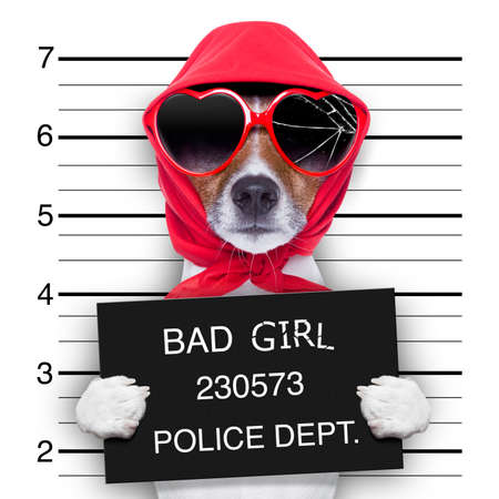 arrested criminal: diva lady dog posing for a lovely mugshot