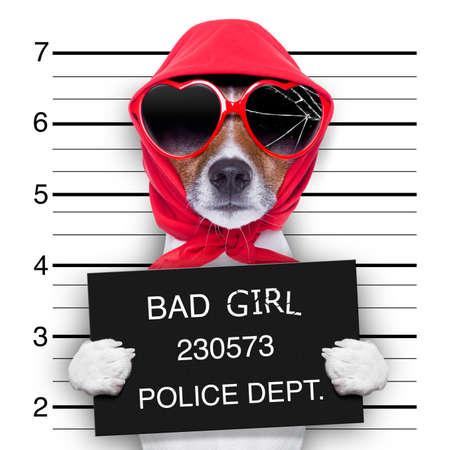 carcel: perro diva dama posando para un precioso mugshot