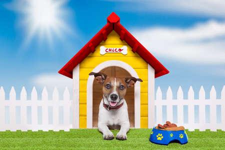 Hund lebt in seiner eigenen bunten Haus Standard-Bild