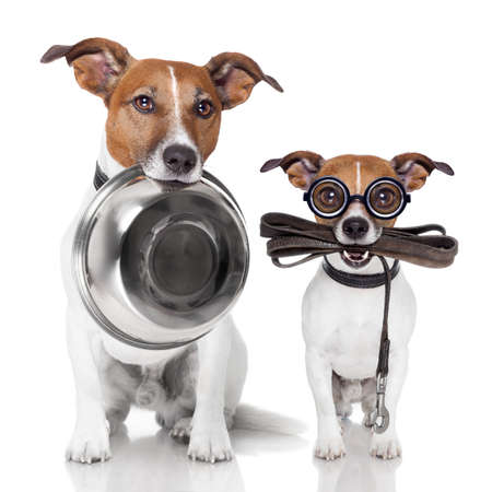 two dogs with food bowl and leather leash
