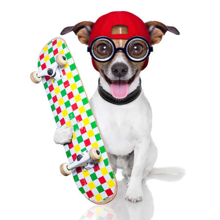 skater dog with red cap ready to play photo